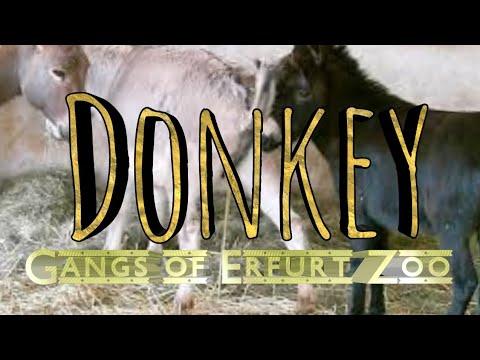 Esel Gangs of Erfurter Zoo