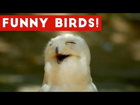 Funny Parrot & Bird Videos Weekly Compilation November 2016 Funny Pet Videos