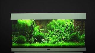 Juwel Aquarium Rio 180 Einrichtungsbeispiel / Tutorial