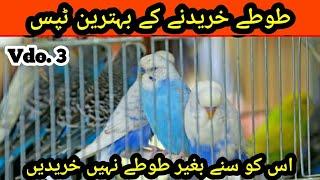 Australian Parrots Buying Tips, Market se buy krny k Tips in Urdu/Hindi |Arham Naveed| Budgies,Prt.3