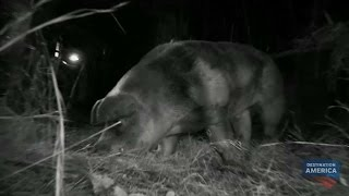 Is This Captured Beast the Elusive Hogzilla? | Mountain Monsters