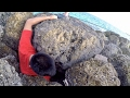 Rescuing A Tropical Fish From A Rocky Grave Beach Fishing In The Bahamas