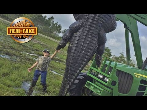 RECORD SIZE GIANT ALLIGATOR Real or Fake