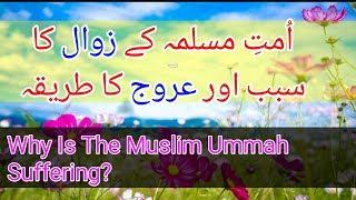 Why is the Muslim Ummah Suffering?    Islamic Whatsapp Status   peer saqib shaami