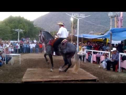 expo cd altamirano concurso de caballos bailadores 2013