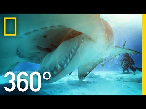 360° Great Hammerhead Shark Encounter National Geographic