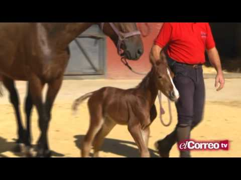 El Toro y el Caballo PGM 41 Bloque 1 26 09 15