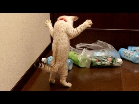 Funny animals are best try not to laugh challenge Funny animal compilation
