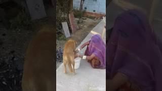 Desi bhabhi and desi milk
