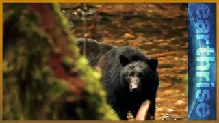 earthrise - Conserving Canada's Great Bear Rainforest