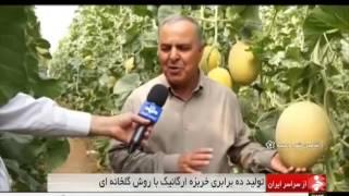 Iran Shahin-Shahr & Meymeh county, Melon greenhouse خربزه گلخانه اي شهرستان شاهين شهر و ميمه ايران