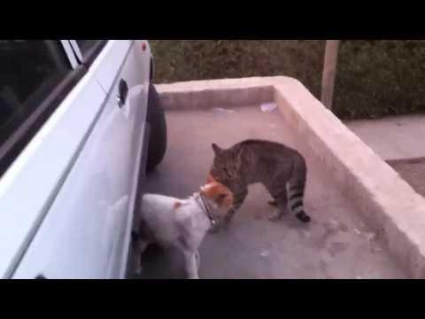 Gatos peleando por un perrito