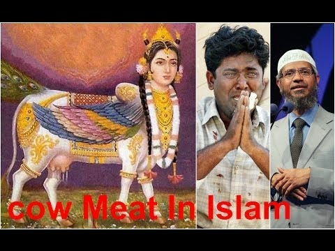 Xxx Mp4 Why Muslim Eat Cow Meat Hindu Wept Infront Of Dr Zakir Naik Fight With Dr Zakir Naik Muslim Eat Cow 3gp Sex
