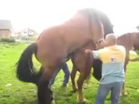 NEW 2015 Fantastic horse mating caballo donkey