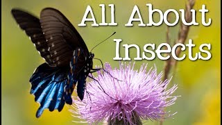 All About Insects for Children: Bees, Butterflies, Ladybugs, Ants and Flies for Kids - FreeSchool
