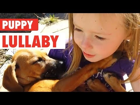 Xxx Mp4 Little Girl Sings Rescue Dog Lullaby Puppy Love 3gp Sex