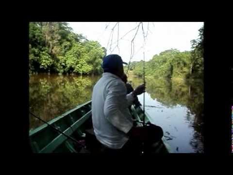 11.12.10 Memancing Udang Galah Prawn Fishing Sg Kayan Lundu Sarawak.