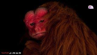 حيوانات ومخلوقات حقيقية ستجمد الدم في عروقك !!