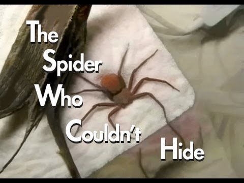 The Spider Who Couldn't Hide