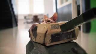 قطة جميل Cats in Tanks
