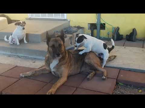 Xxx Mp4 Small Dog Try To Have Sex With Big 3gp Sex