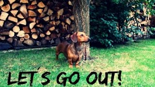 DOG VLOG | Let´s go out! | Life with Carol
