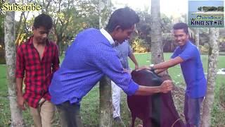 গরুর হাটে পকেট মার ও দালাল চক্র হতে সাবধান (Chandpur King Star)