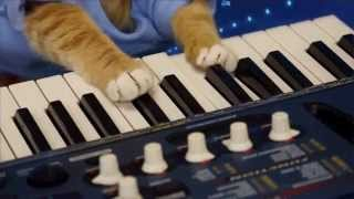 Keyboard Cat Compilation!