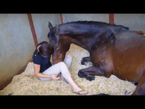 Xxx Mp4 लड़की और घोड़े के बीच ऐसे सम्बन्ध पहले कभी नहीं देखि होगी आपने देखे 3gp Sex