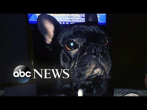 Xxx Mp4 Dog Dies In Plane S Overhead Luggage Bin 3gp Sex