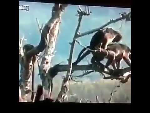 Xxx Mp4 Monkey Doing Sex With Other Monkey 2018 3gp Sex