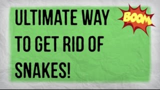 How to Get Rid of Snakes in Your Yard   Getting Rid of a Snake in the Garden Naturally