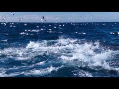 Ennio Morricone Le vent le cri
