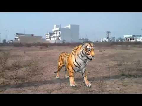 Xxx Mp4 Baalveer V S Tiger Fighting Part 10 By Farman Khan 3gp Sex