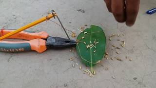 DIY Easy Birds Trap, How To Make Quick Bird Trap using Plier and Pen