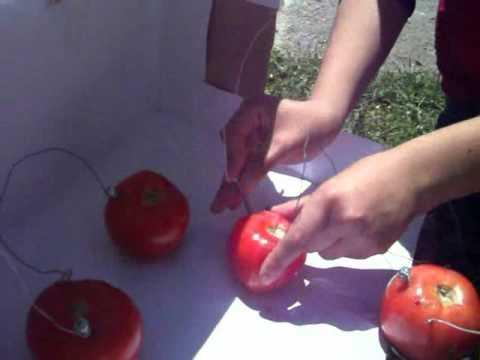 Celdas electroquimica con tomates