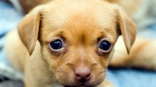 Cute Puppies Compilation || NEW