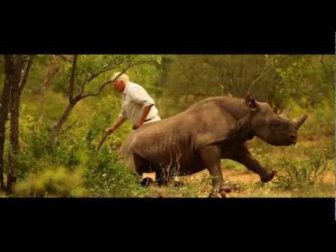 Black rhinos moved to new home by helicopter | WWF