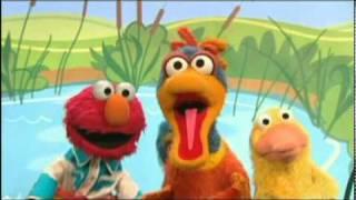 Elmo Has 4 Ducks
