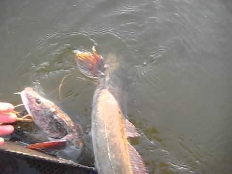 парабель рыбалка охота