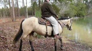 Cool Texas Lady - Buckskin mare