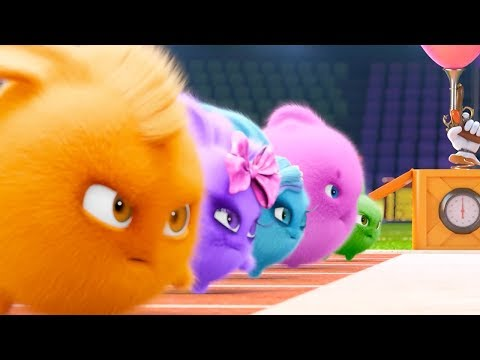 Xxx Mp4 Sunny Bunnies OLYMPICS COMPILATION Videos For Kids Funny Videos For Kids Videos For Kids 3gp Sex