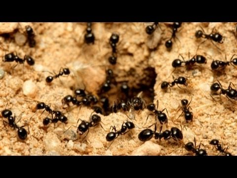Xxx Mp4 All About Ants 3gp Sex