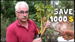 Save THOUSAND$ with this simple TRICK to 10X your Shrubs