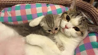 Mother Cat and Cute Kittens - Best Family Cats Comilation 2018