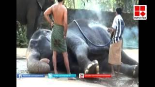 Anakotta -Guruvayoor elephant sanctuary │Reporter Live