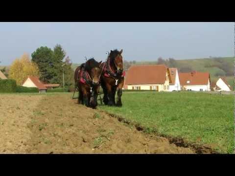 Traction animale labour. Horse plowing. Arbeitsperde Plügen avec des chevaux ardennais.