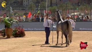 N.39 D AJAYEB - MENTON 2017 - Fillies 2 years old (Class 2B)