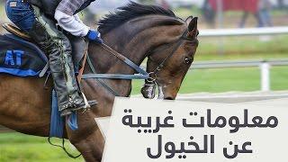 معلومات غريبة عن الخيول أول مرة تسمعها