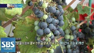 꿀같이 달고 단 무주 산머루 @SBS 생활경제 140822